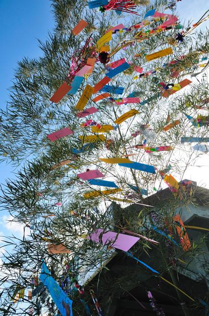 Photos: 七夕飾り