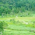 写真: 田ノ原湿原