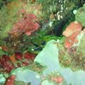 170915アニラオ水中写真20