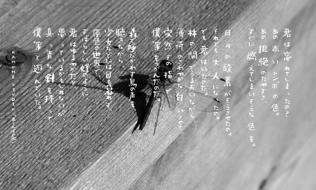 AVE写真illus.詩N2075 1611 No.24