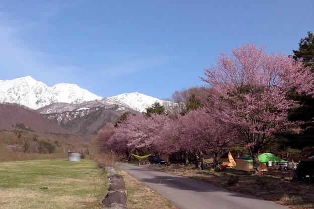 白馬三山を眺める白馬アルプスオートキャンプ場