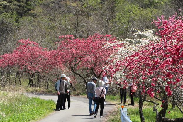 花桃観光見物客