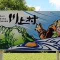 川上村パネル