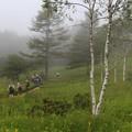 霧が山腹から降りて来た湿原