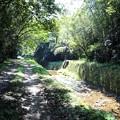 木漏れ日の自然の小道
