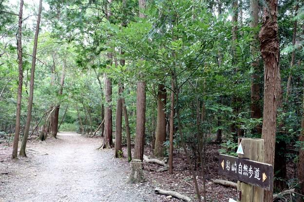 岩崎自然歩道