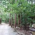 写真: 岩崎自然歩道
