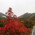 写真: 乗鞍とナナカマドの紅葉