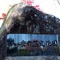 「八ヶ岳自然文化園」石碑