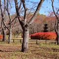 Photos: 桜に囲まれた三重小塔