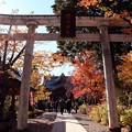 Photos: 懐古神社鳥居