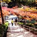 写真: 参道階段
