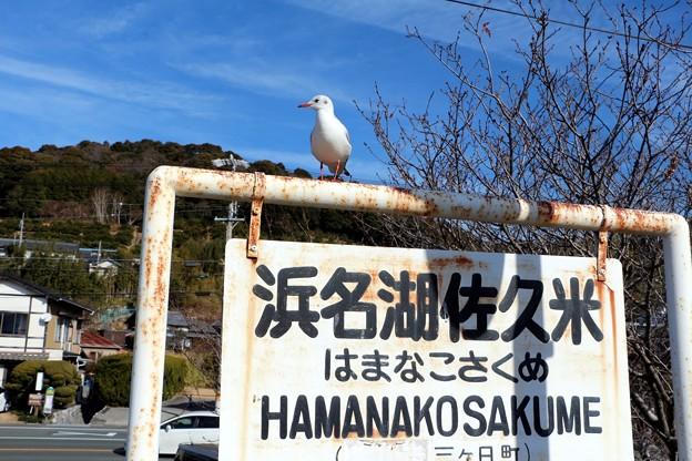 「浜名湖佐久米駅」標にもユリカモメ