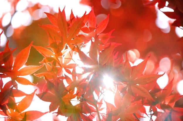 写真: 赤い屋根