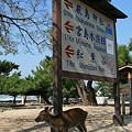 写真: 宮島の鹿さん‥♪