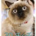エントリーNo30