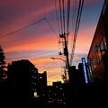 Photos: Z焼け