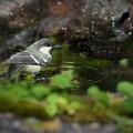 鳥冷やの泉