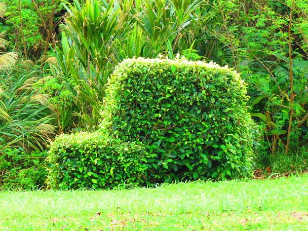 写真: クルマの植木