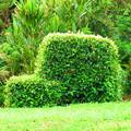 クルマの植木