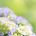 写真: 咲きました~~