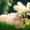 写真: *煙の花*