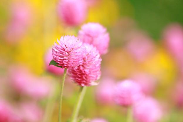 写真: 秋の花壇