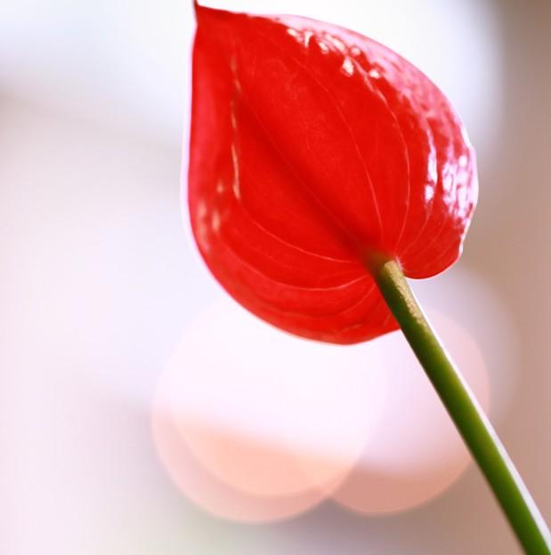 私も花です~~