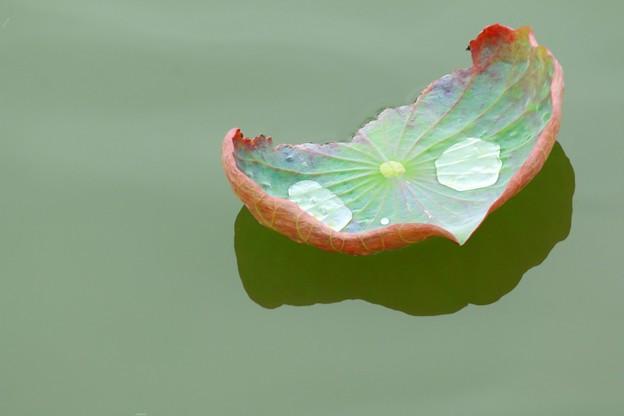 写真: 蓮池の小舟
