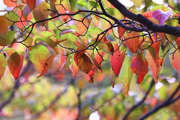 写真: 秋色(3)