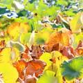 写真: 蓮池の秋
