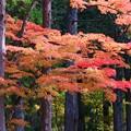 写真: 秋色(7)