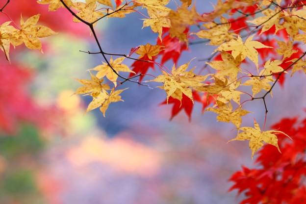 写真: 秋色(8)