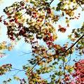 写真: 空は錦模様