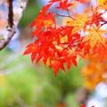写真: 秋色(9)