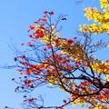 秋晴れの空