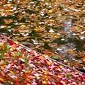 池の落ち葉~