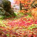 写真: 落ち葉の彩