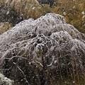 写真: 雪の精