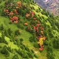 写真: 紅葉ちょっと散りばめて。