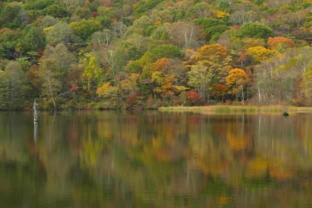写真: 鏡池の色づき。