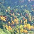 写真: 谷底の黄金色。