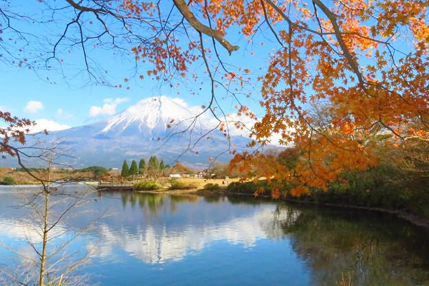 終秋の田貫湖。