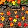 写真: 石畳のぬれ落ち葉。