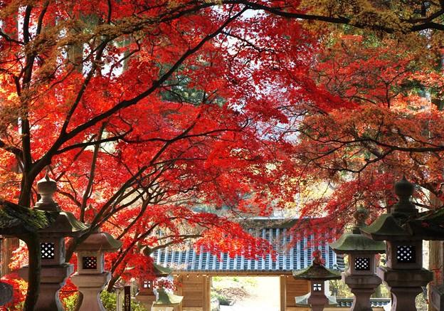 参道覆う紅葉。
