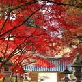 写真: 参道覆う紅葉。