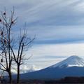 残り柿と富士のお山。