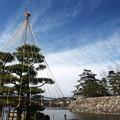 雪吊りと松本城。