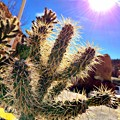 Now I have sunshine and cactus♪