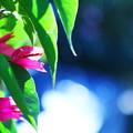 オリーブ畑の花達♪